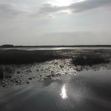 Drużno Lake