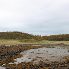 Engøya in Fjærvær. Beach meadow and beach swamp