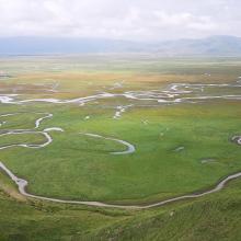 Peatland marshes