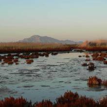El Hondo. Embalse de Levante; al fondo Sierra de Callosa del Segura