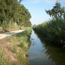 El Hondo. Canal Principal de Riegos de Levante