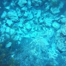 Marjal de Pego-Oliva. Detalle de una surgencia de agua subterránea