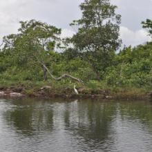 Oiseau près de Mougagara