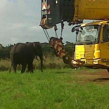 Éléphant dans un site pétrolier