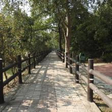 Cycle Track for visitors in Nawabganj Wetland.