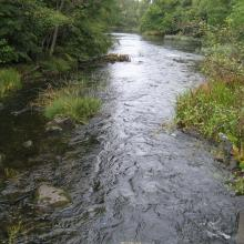 A stream water course of Emån, more upstream