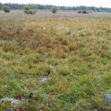 Ungrazed wetland near Emån