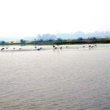 A panoramic view of Samaspur Wetlands