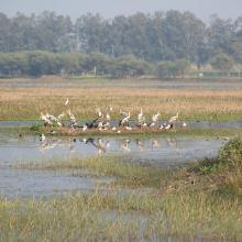 Congregation of Painted stork at Sandi Bird Sanctuary