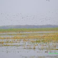 Congregation of Migratory BIrds at Sandi Bird Sanctuary