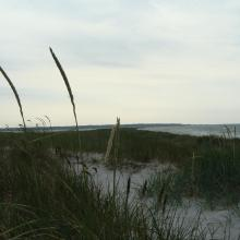 The dunes in Falsterbo