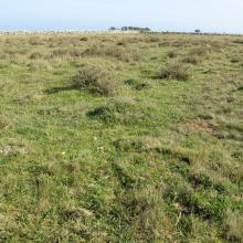 The southern sub site. Well grazed Dasiphora fruticosa