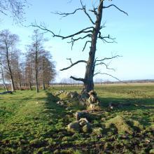Dead Wood in Klingavälsåns dalgång