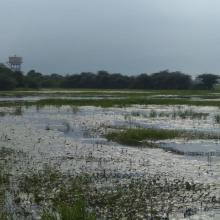 A panoramic view of Sarsai Nawar