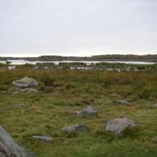 Grazed wetlands of nature reserve Inre Kilsviken.