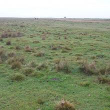 Vast area of grazed wetland