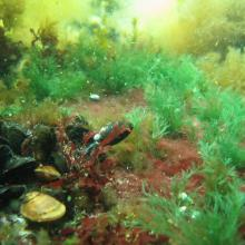 Marine diversity at the site