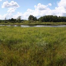 Wetlands along the river, river meadows formerly used for mowing