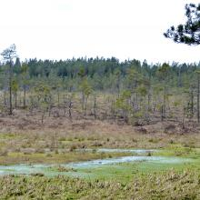 Wet pool in lag fen bordering raised bog.