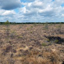 Central area of raised bog.