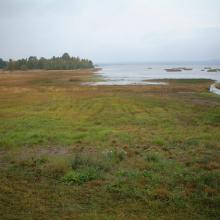 Lake Persöfjärden- Shore meadow and reed beds.