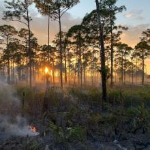 Prescribed Wildfire Burn