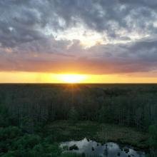 Drone Image of Corkscrew Swamp Sanctuary