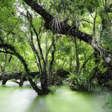 Swamp at Corkscrew Swamp Sanctuary