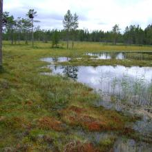 Rich fen at Storgjotkölen.
