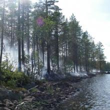 Management by prescribed forest fire (in non-wet forest).