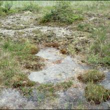 Calcareous tufa in the site Tysjöarna