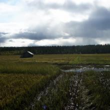 Hay barns, Vasikkavuoma
