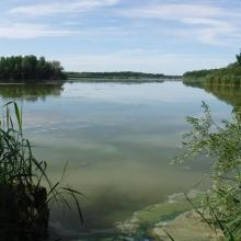 Aires protégées : RNN étang de la Horre (CENCA)