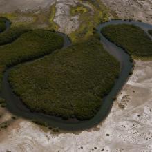 Estero Zacatecas Detalle