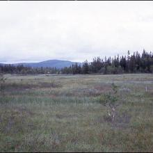 Large fens at the mire complex Flån. 1993-08-10.