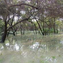 Janghang at high tide