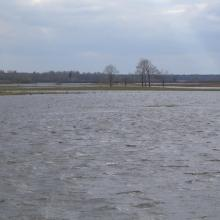 Flooded meadows in Vileity site