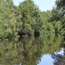 Canal Chamber, Laguna de Alvarado