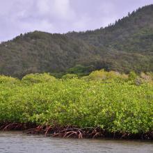 Vista del manglar y montaña de pino desde el canal