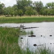 Mare Sapiengou dans le Parc W : un des points d'abreuvement de la faune sauvage