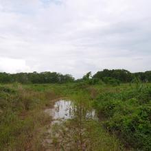 Bahía de Panamá