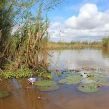 Lac Alaotra avec ces végétations caractéristiques