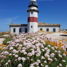 Isla de Sálvora. Faro y Armeria en flor
