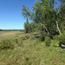Birch forest and mire at Hynna