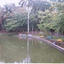 Laguna Parque Miguel Angel de Quevedo (Viveros)