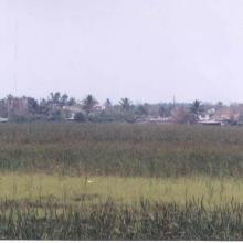 Laguna Lagartos 1999