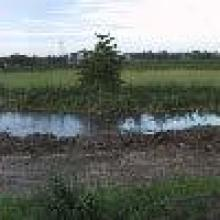 Panorámica de Laguna Lagartos en Recuperación Mayo 2003.