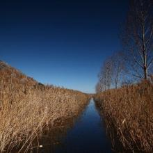 Dragoman marsh.