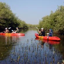 Al Qurm Nature Reserve