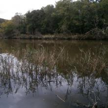 Ropotamo River. The photo was taken during a field study part of the preparation of the Ropotamo Reserve Management Plan.